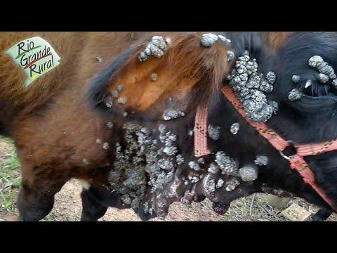 virus de papiloma bovino