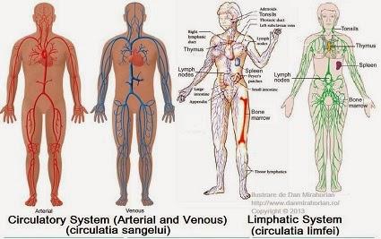detoxifierea sistemului limfatic