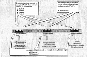Analgezicele opioide in tratamentul gonartrozei