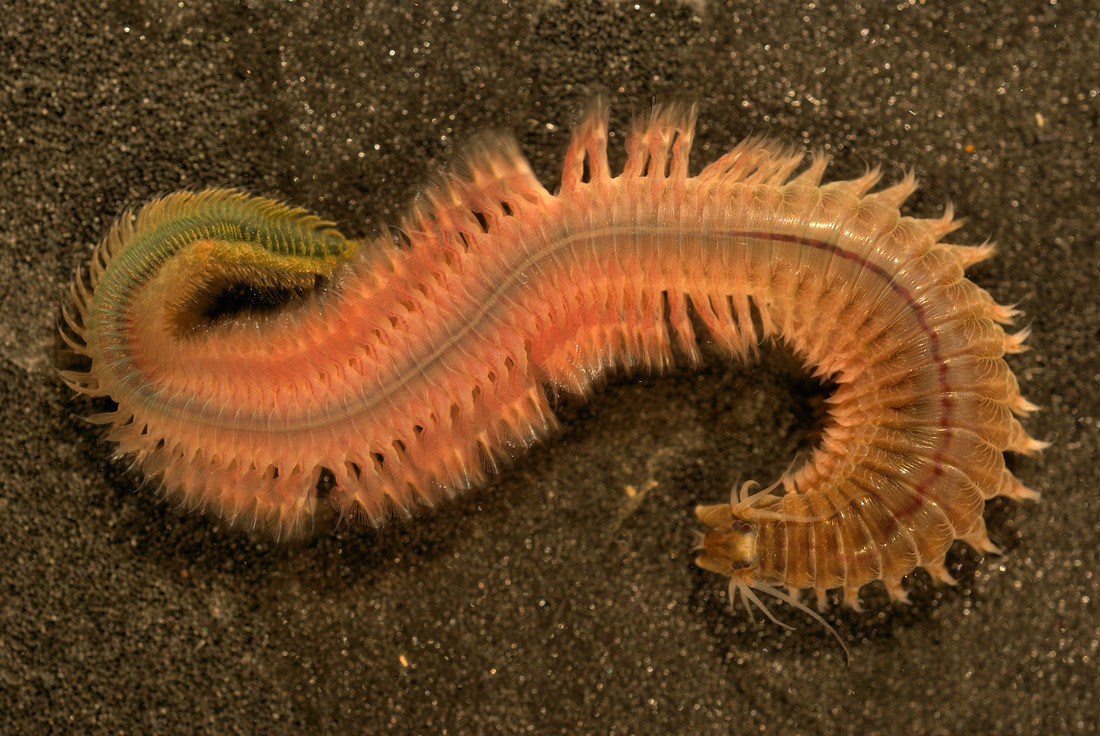 Makalah Filum Arthropoda