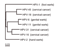 hpv cancer subtypes