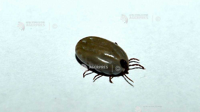detectarea unui parazit parazitoza la om