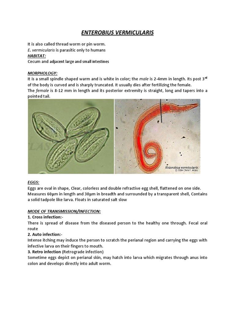 paraziti enterobius