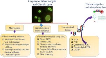sistematică cu bandă largă pastile de vierme top 10