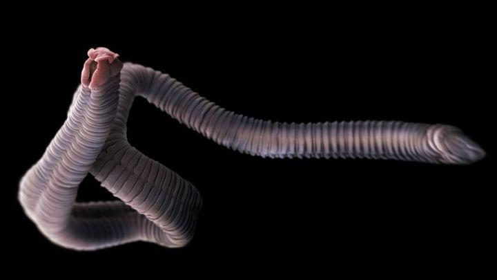 Papiloma humano causas y consecuencias - transroute.ro