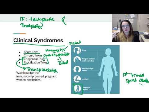 toxoplasma igg pozitiv tratament