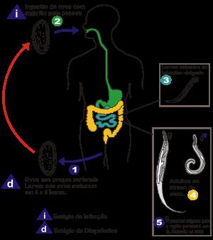 ovarian cancer left untreated hpv virusu tedavisi var m
