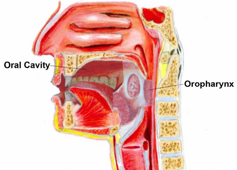 hpv virus and throat