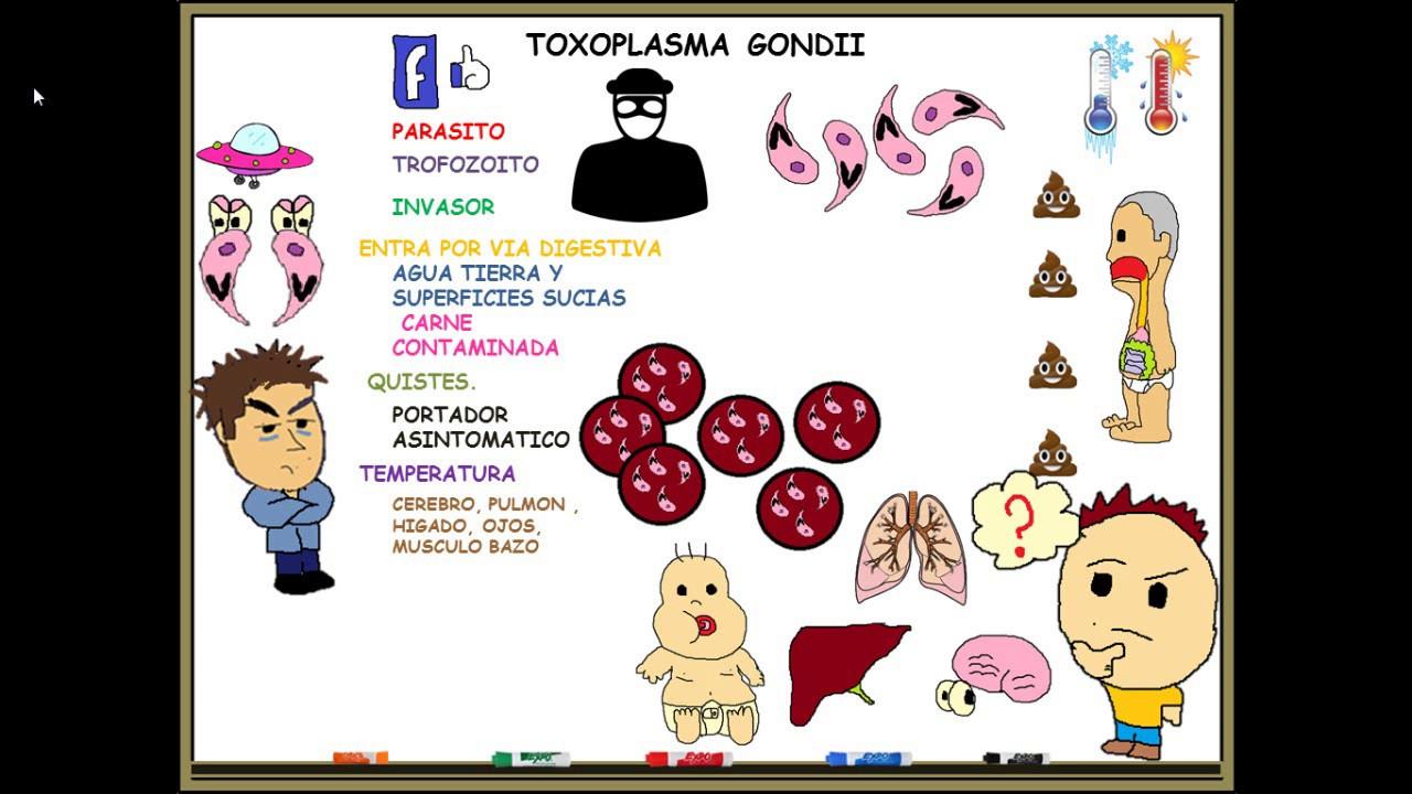 toxoplasma gondii in sarcina