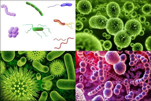 bacterii heterotrofe
