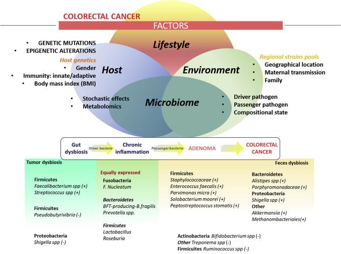 f colorectal cancer cum să scapi de viermi pinioși gravide