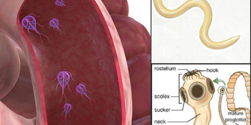vierme de ou în simptomele copilului