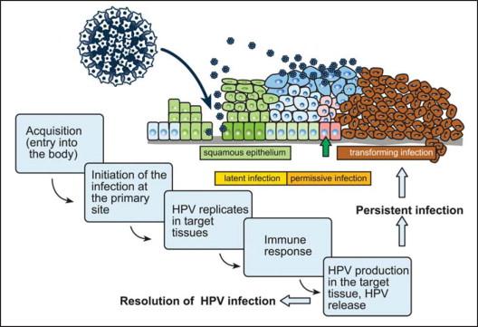 Human papillomavirus pathology - transroute.ro