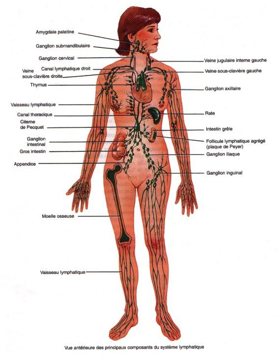cancerul se transmite dela om la om cancer de plamani stadiu 4
