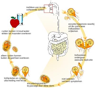Helmintox voor de behandeling van Giardia's