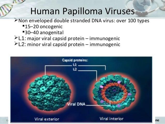 hpv virus and endometrial cancer mod de a scăpa de pastile parazite