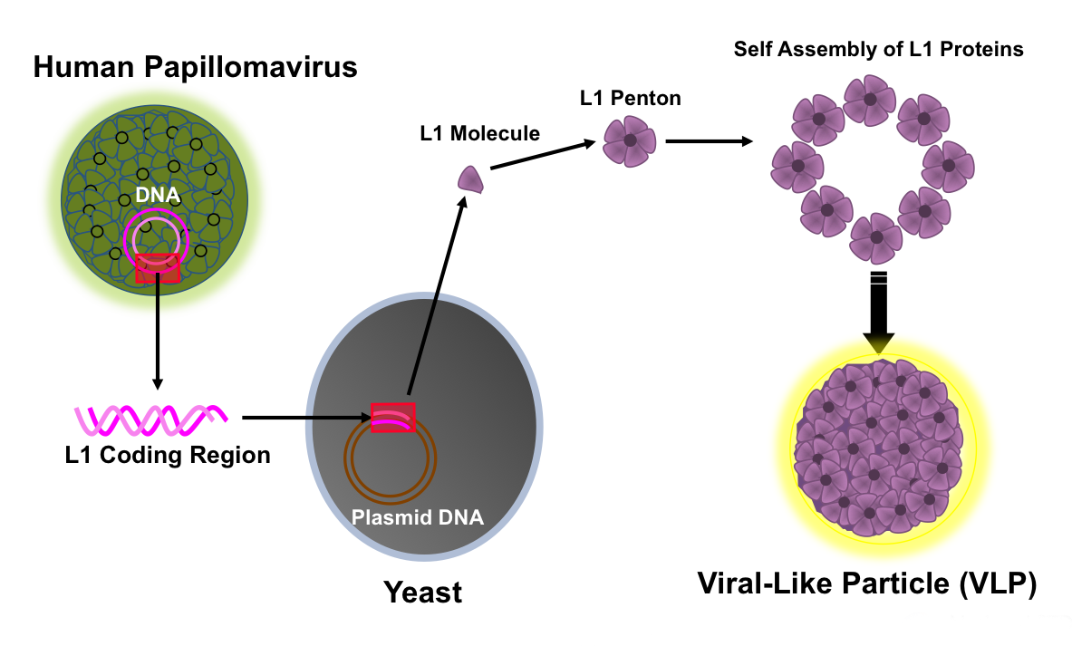 Autentificare, Papillomaviridae vaccine