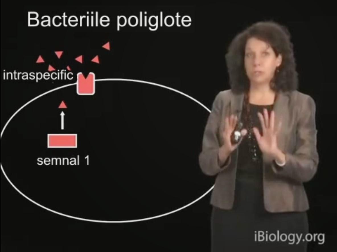 reinfeccion por oxiuros toxoplasmoza in sarcina