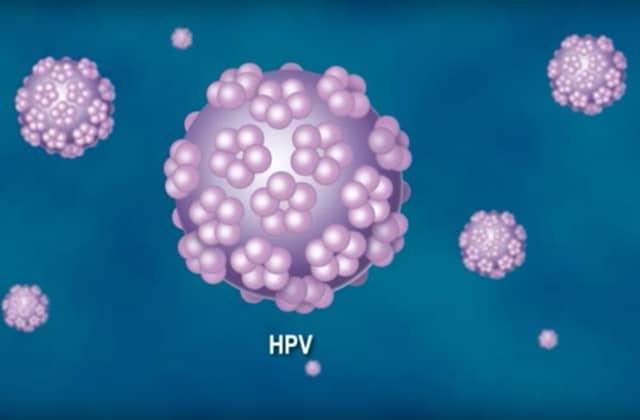les papillomavirus hpv)