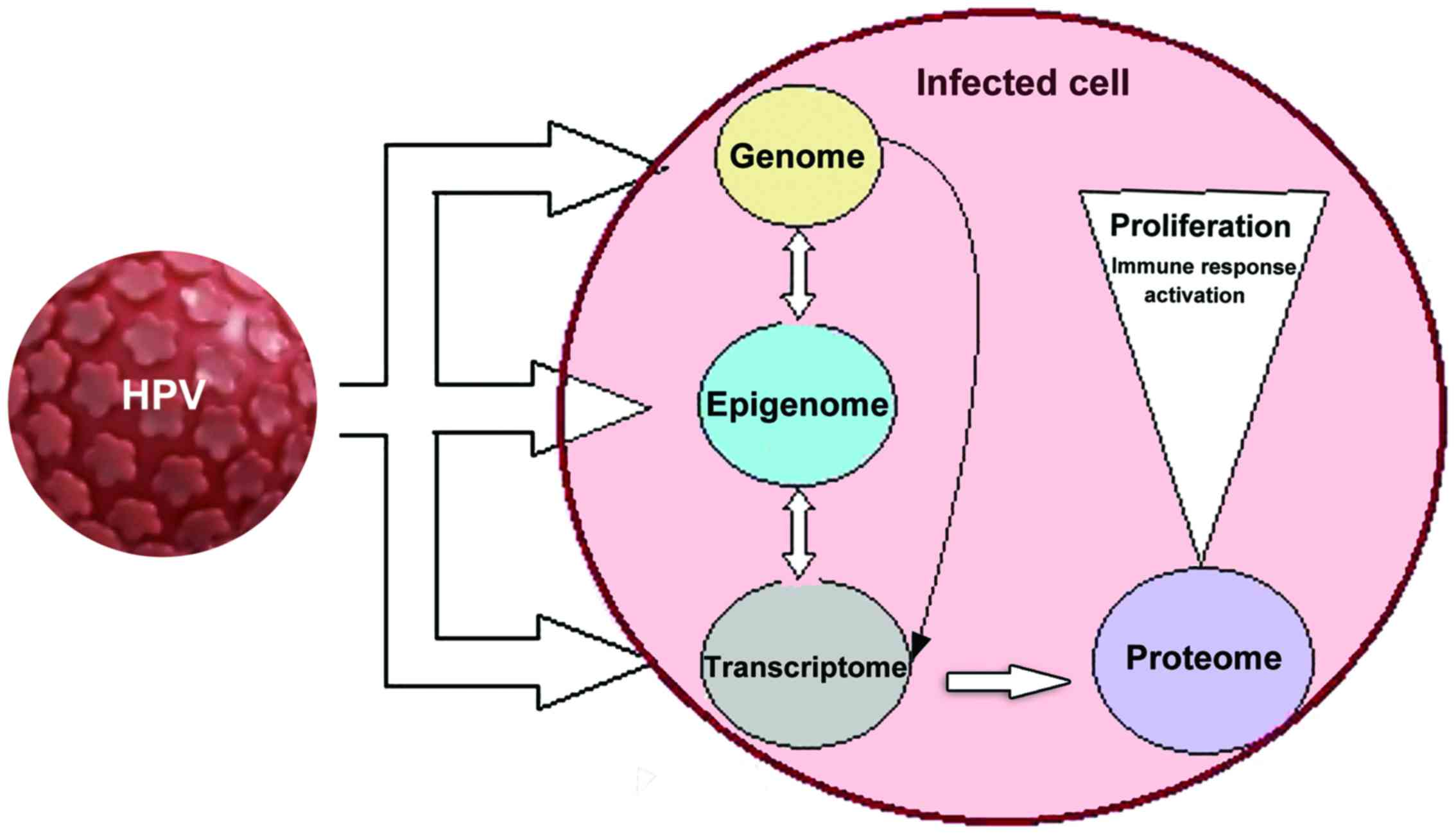 hpv virus and stress vaccino papilloma virus obbligatorieta