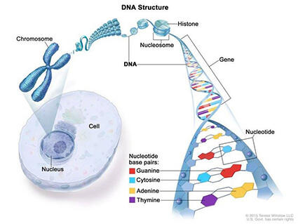 cancer of genetic disorders