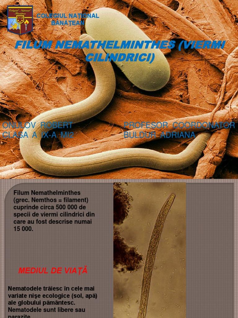 reproducerea nematodei papillon zeugma suite