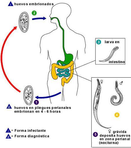 significado de oxiuriasis papiloma palato