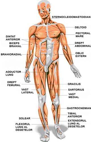 este prezent în corpul uman