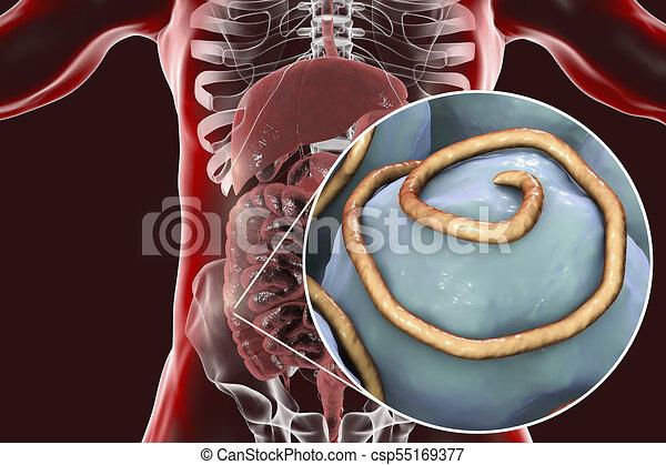 infecția giardiei la om