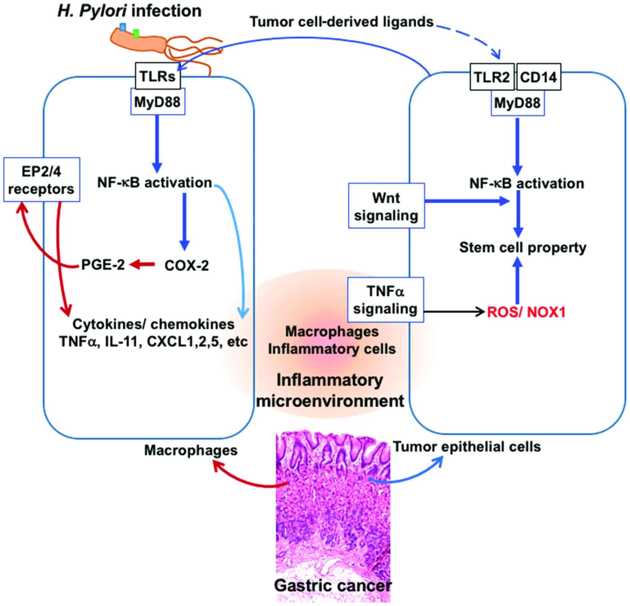 xanthomonas bacteria papillom hals entfernen