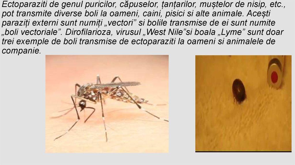 3 paraziti comuni care te mananca de viu