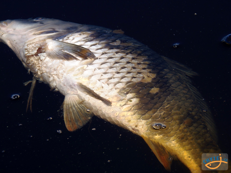paraziti sladkovodnich ryb