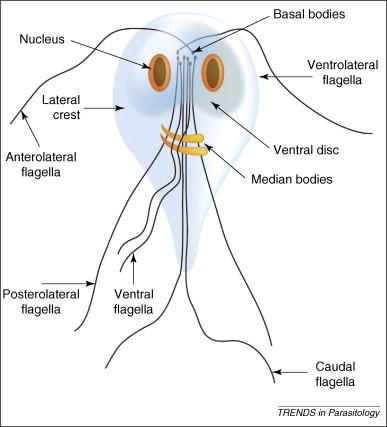 Infecţii intestinale ale epocii moderne: diareea călătorului, prin lupa microbiologului
