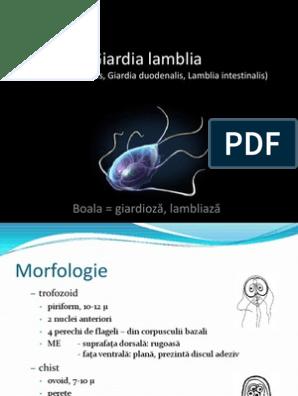 antibiotice pentru giardia incinta con papilloma virus
