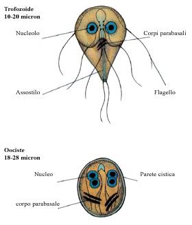 Virus de papiloma humano cuello de utero - transroute.ro