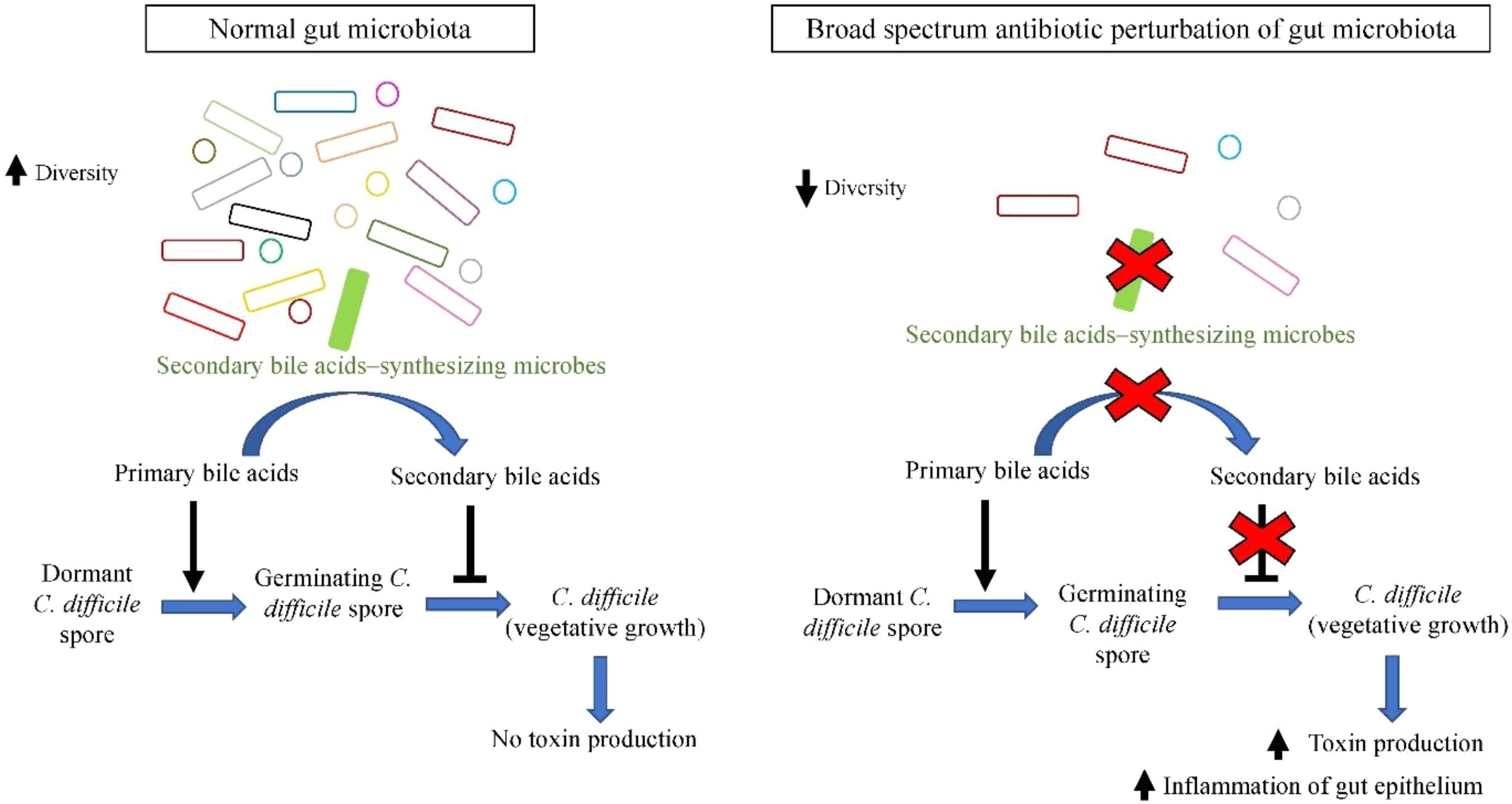 Papilloma virus e nausea