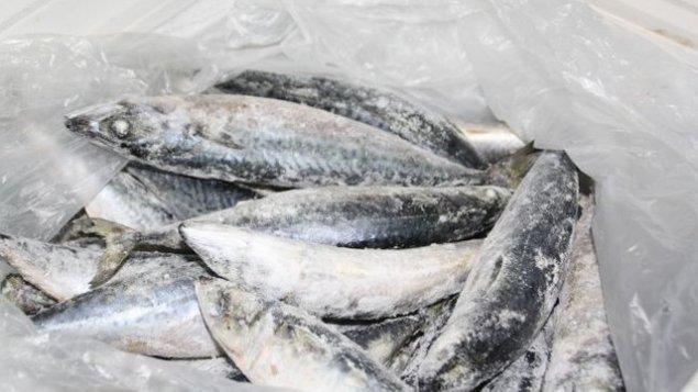 Viermii în pești: care este riscul real? - La copii