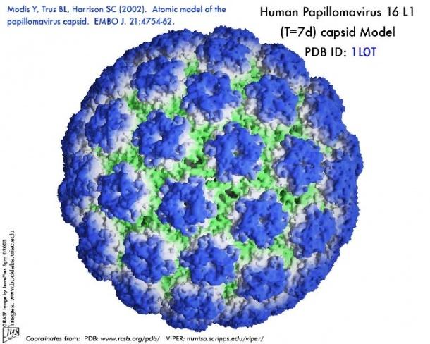 papilloma from warts distrugerea rapidă a viermilor