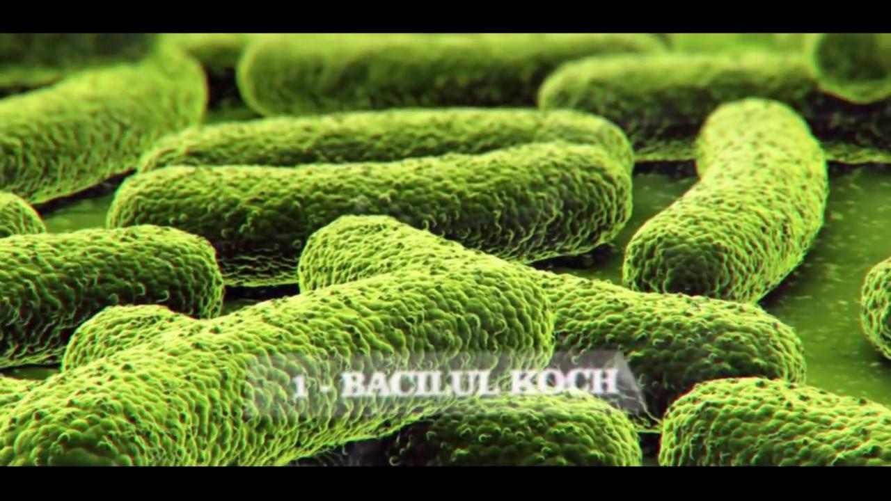 bacterii heterotrofe)