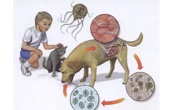 tratamentul cu vierme al ouălor detectate