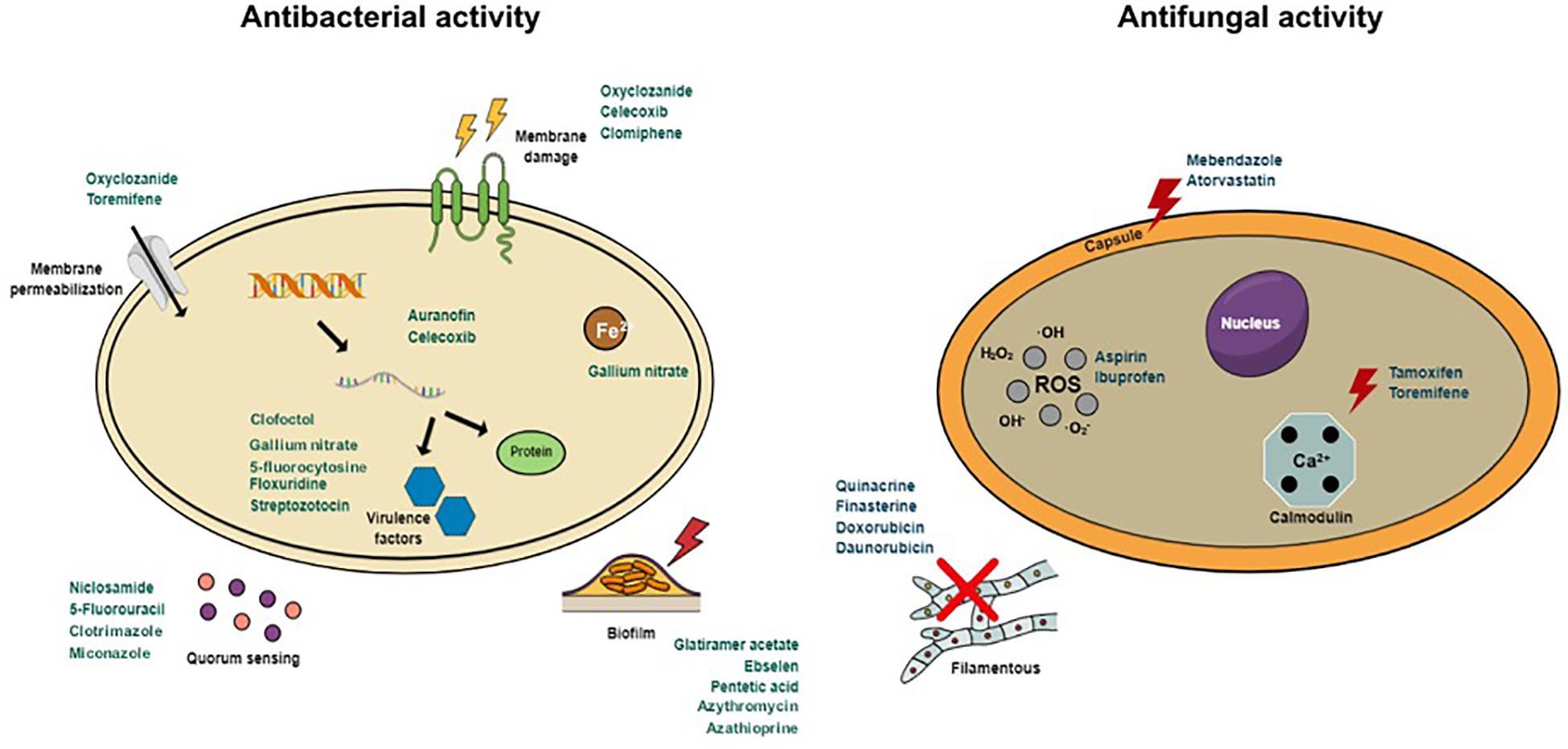 Anthelmintic agents target. Oxiuros en el ano tratamiento
