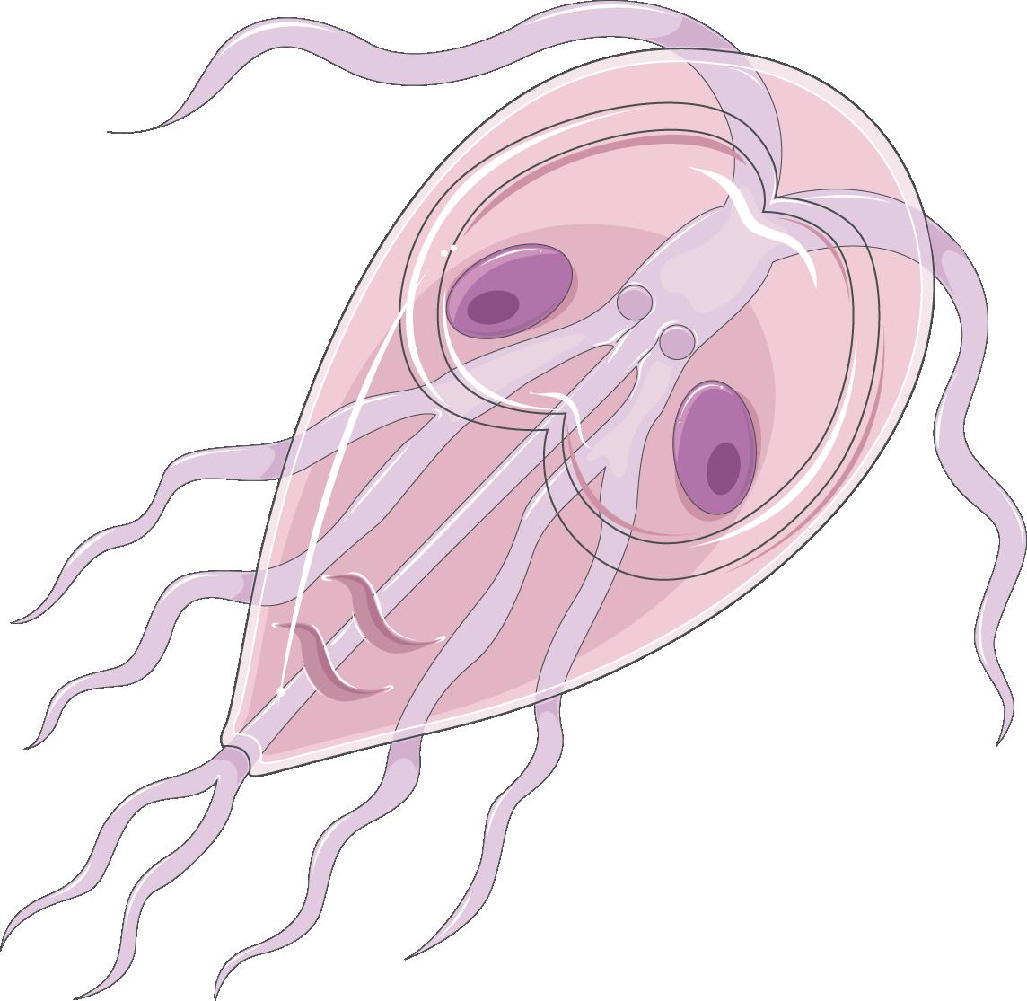 bacterii giardia medicamente antihelmintice pentru viermele uman