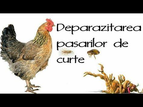parazitoze la pasari)