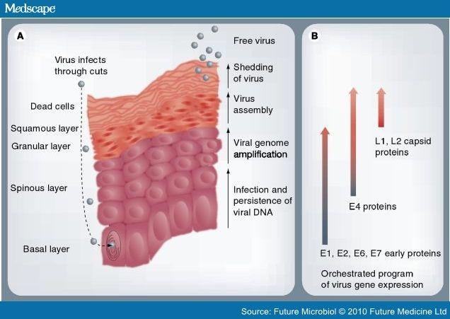 dăunătoare ciupercilor parazite hpv/ papiloma virus 9 cepas