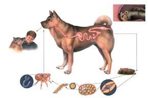 Paraziti u stolici kod psa - Judith McNaught-Jednom i Zauvek