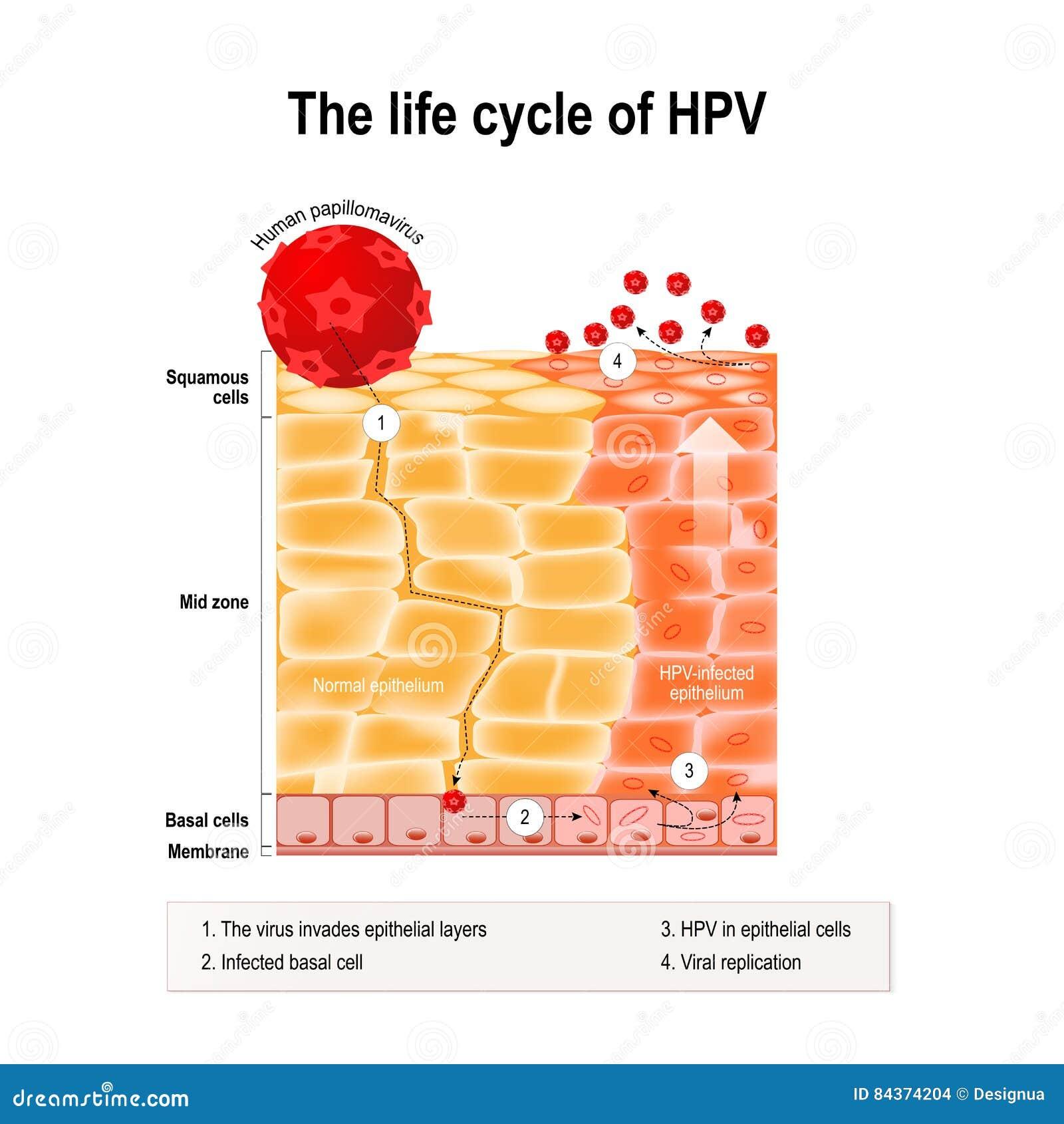 cancer e hpv