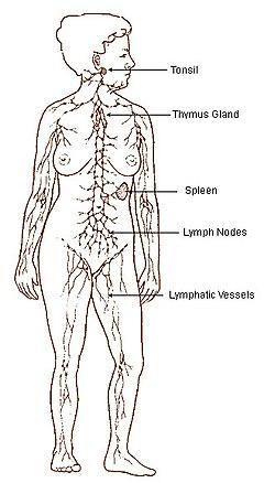 cancer limfatic metastaza