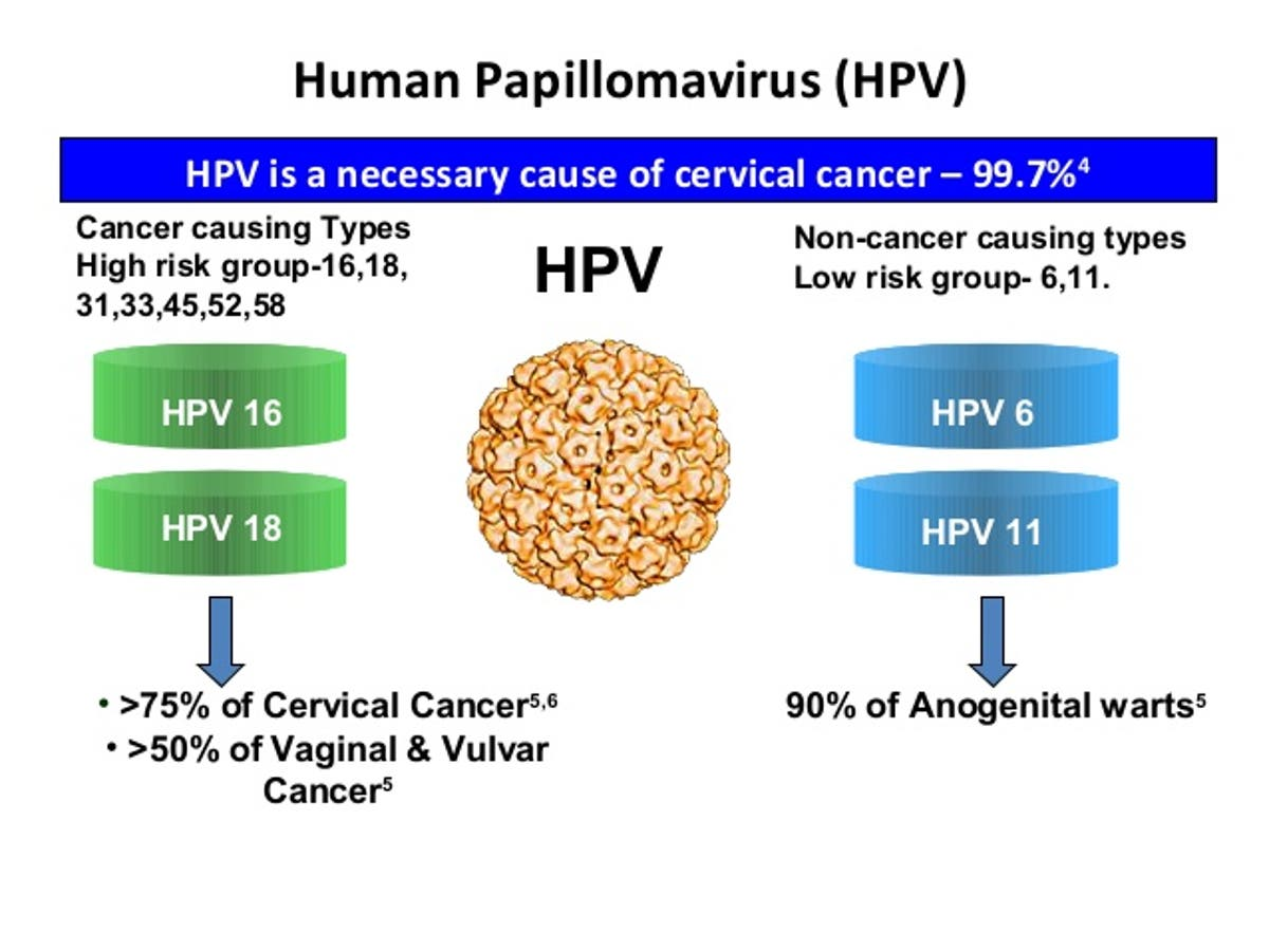 Human papillomavirus (hpv) causes symptoms and treatments, Paraziti u krvi kod pasa