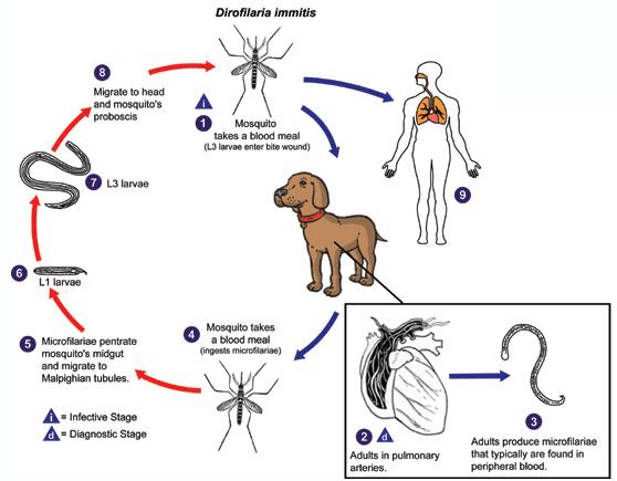 retete detoxifiere colon what is papilloma
