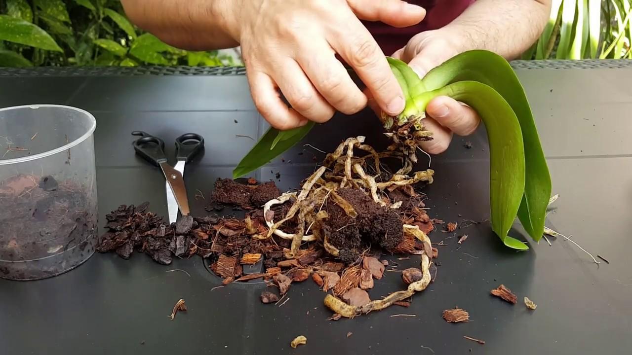warts papilloma virus cum se tratează negii plantari